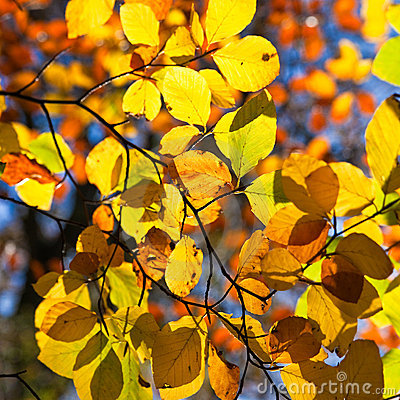 Backlit leaves on a tree in autumn