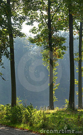 Backlit oaks