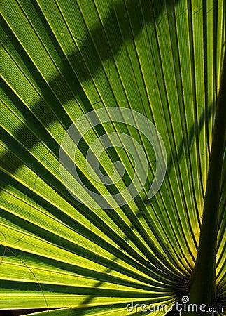 Backlit Palm Leaf