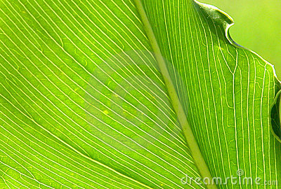 Backlit Palm Leaf