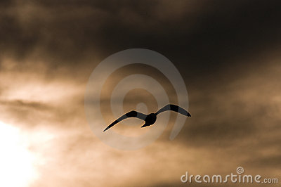 Backlit, Serene Sea Bird