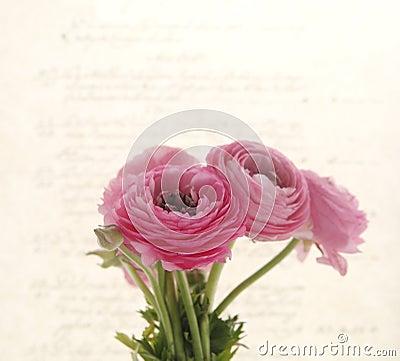 Backlit spring flowers on old script
