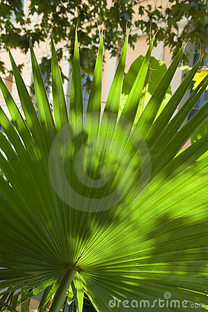 Backlit street palm leaf