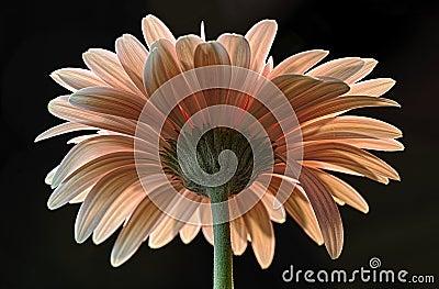 Backside of Flower
