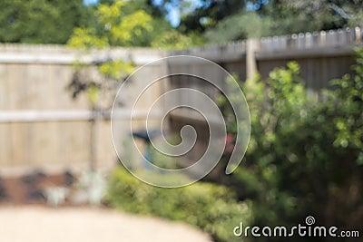 Backyard Blur Bokeh