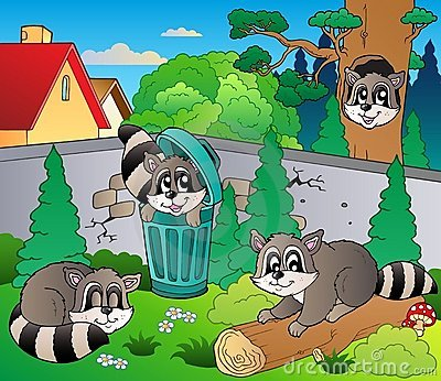 Backyard with cute racoons