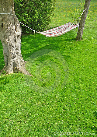 Backyard hammock on a sunny spring day