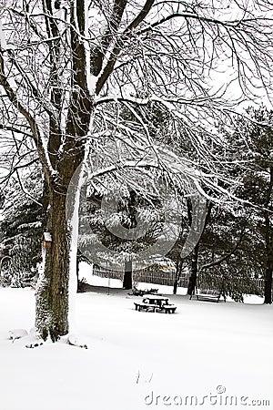 Backyard Snow Scene II