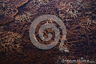 Bactérias do geyser