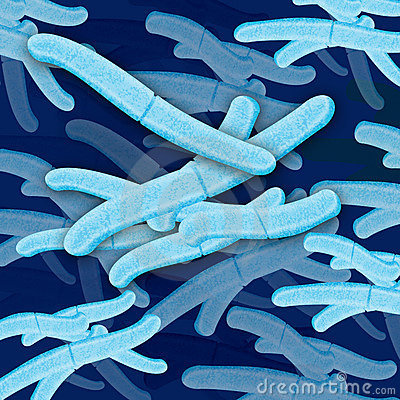 Bacteria cell grouping
