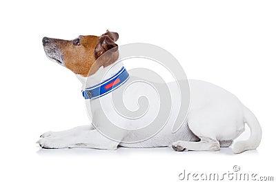 Bad Dog Stock Photo - Image: 48732932