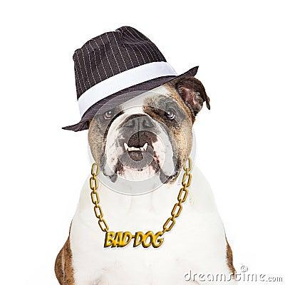 Travel Dog Bed >> Bad Dog Bulldog Stock Photo - Image: 49849330