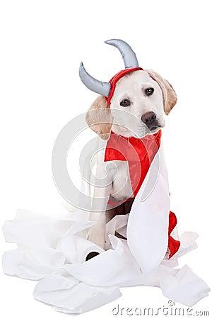 Bad Dog Stock Photos - Image: 30625903