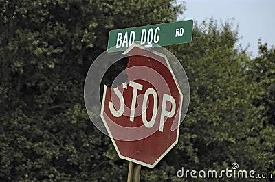 Bad Dog Road!