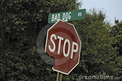 Bad Dog Road & Sign