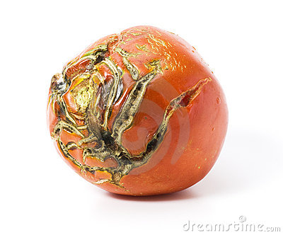 Bad tomato with scars isolated