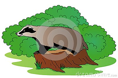 Badger beside bush
