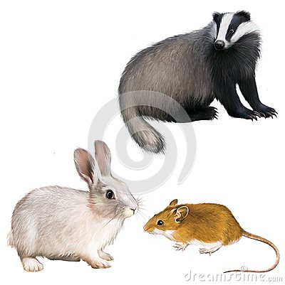 Realistic rabbit illustration - photo#9