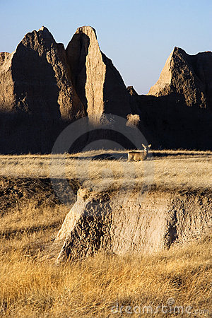 Free Badlands, South Dakota. Royalty Free Stock Photography - 3420887