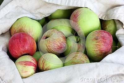 Bag of Red-Green Apples in summer