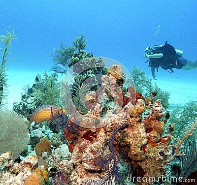 Bahamas reeflife