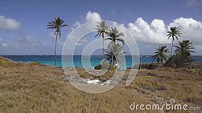 Baia inferiore, Barbados video d archivio