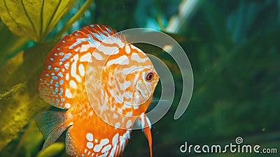 Bains colorés de poissons dans l'aquarium banque de vidéos