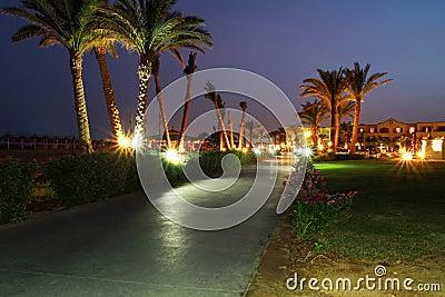 Bajo las palmeras en la noche