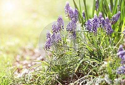 Bakgrund blommar sommar