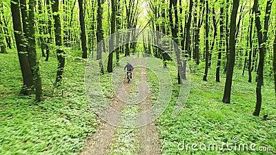 Balades cyclistes le long de la route forestière banque de vidéos