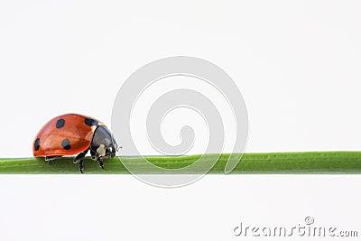 Balancing bug