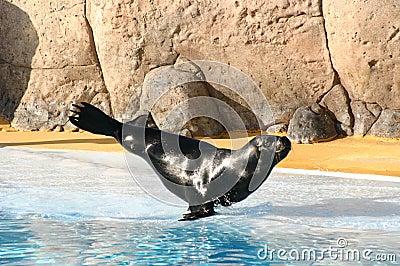Balancing seal