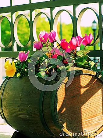Balcony flowers
