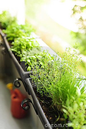 Free Balcony Herb Garden Royalty Free Stock Photos - 21381338