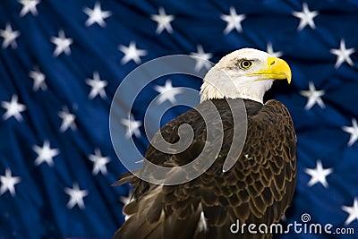 Bald Eagle Against USA Flag