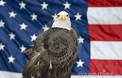 Bald Eagle Against USA Flag