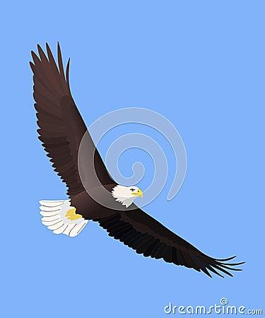 Free Bald Eagle Flying Royalty Free Stock Image - 7001656