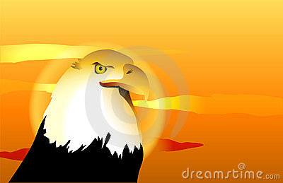 Bald Eagle Sunset