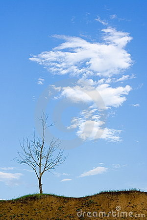 Bald tree and cloud