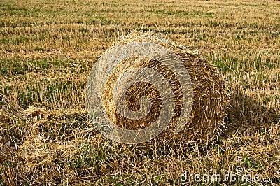 Bale on a field