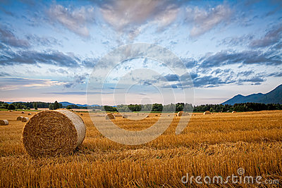 Bale of hay on wheat field against dramatic morning sky
