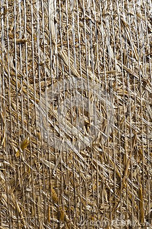 Bale with straw
