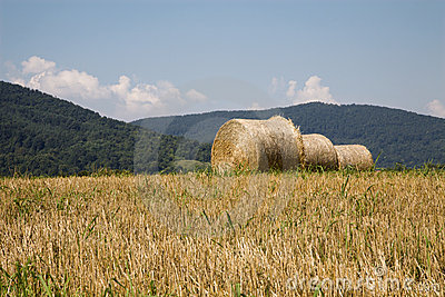 Bale of the straw on the acre
