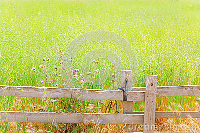 Balearic green meadow in formentera and wood fence