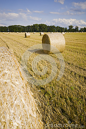 Bales on a field