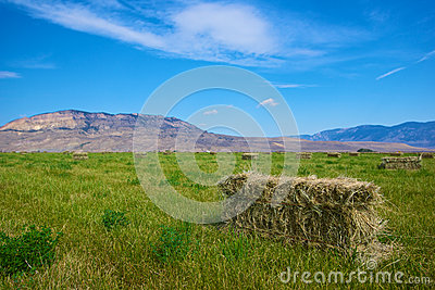 Farmland Hay is Gathered