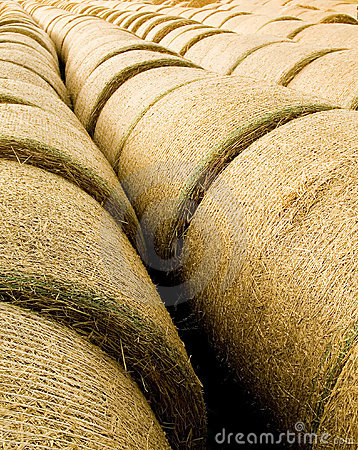 Free Bales Of Straw Royalty Free Stock Images - 6037279