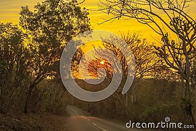 Bali road