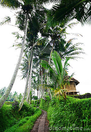 Bali rural scenic view with farmer hut