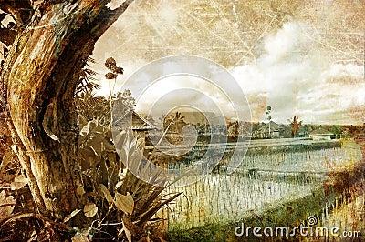 Balinese fields